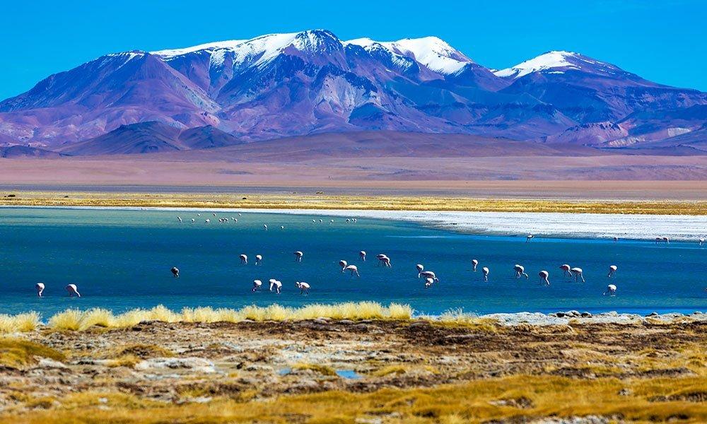 Desierto de Atacama Laguna Chaxa