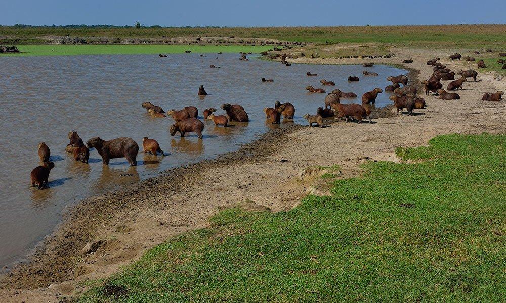 Una aventura por los Llanos Orientales de Colombia