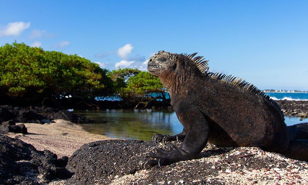Islas Galápagos Iguana
