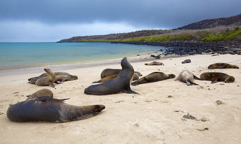 Islas Galápagos Leones Marinos