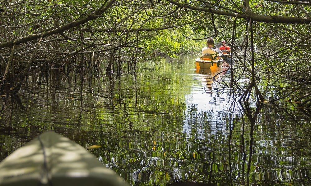 Kayaks Manglares